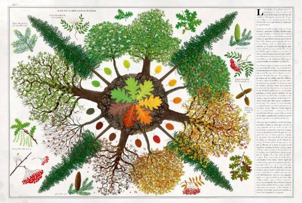 Paso de las estaciones en los arboles. libro arboles editado por maeva y escrito por piotr soha