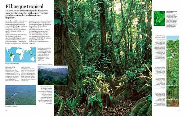 El gran libro del arbol y del bosque. Editorial Juventud. EStructura de un bosque.