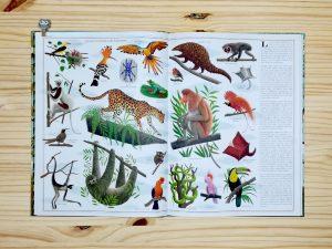 Libro árboles interior sobre sus habitantes editorial maeva.