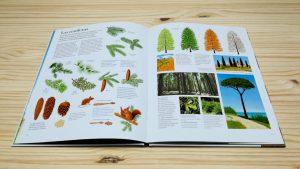 el gran libro del arbol y del bosque editorial juventud coniferas.