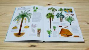 El gran libro del arbol y del bosque- Interior palmeras. editorial juventud