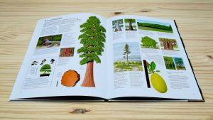 El gran libro del arbol y delos bosques Interior sobre records. Editorial Juventud