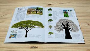 El gran libro del arbol y del bosque editorialjuventud. Sabana