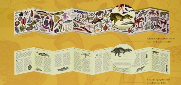 Historia-de-la-vida-evolucion-Desplegados- cara y envés-impedimenta