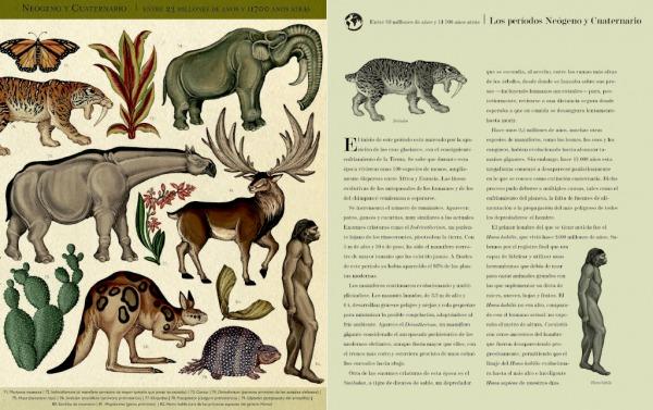 Historia-de-la-vida-evolucion-Interior1T-hominido-impedimenta