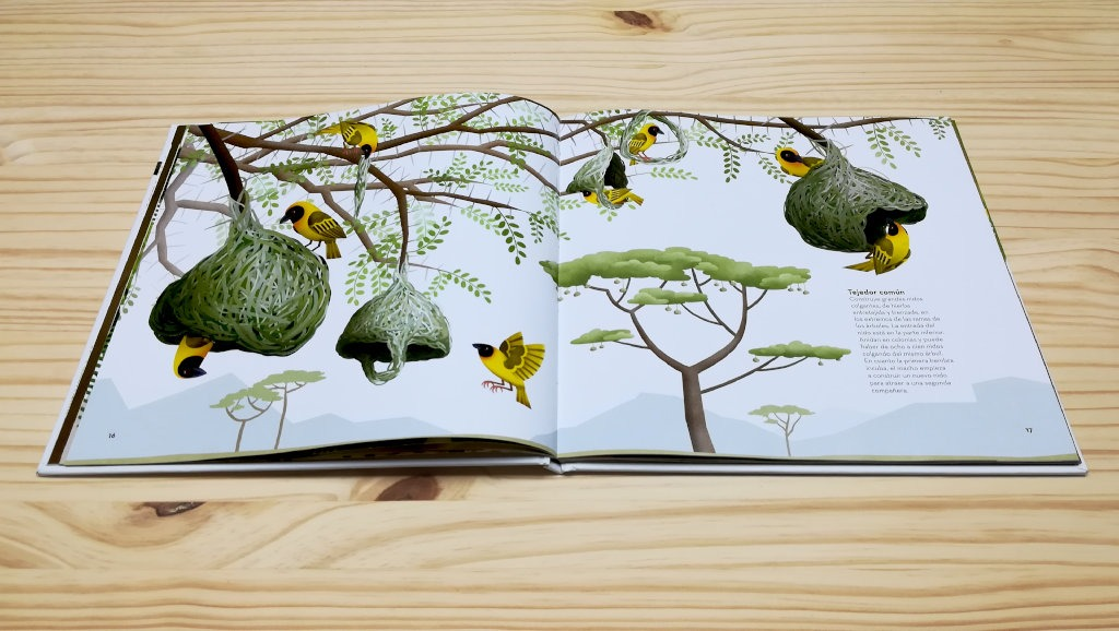 nidos-increibles-tejedor-koala