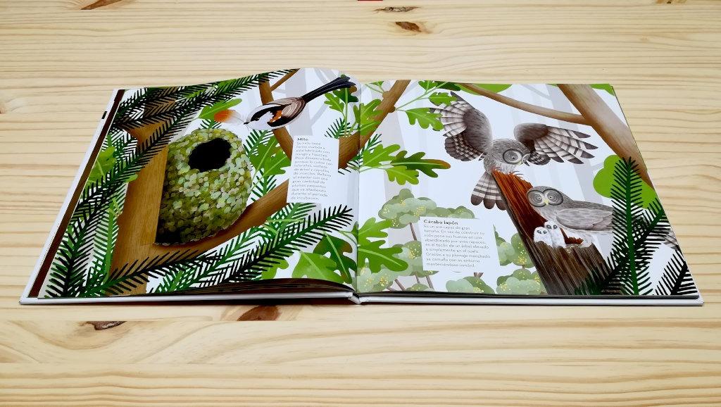 nidos-increibles-mito-koala