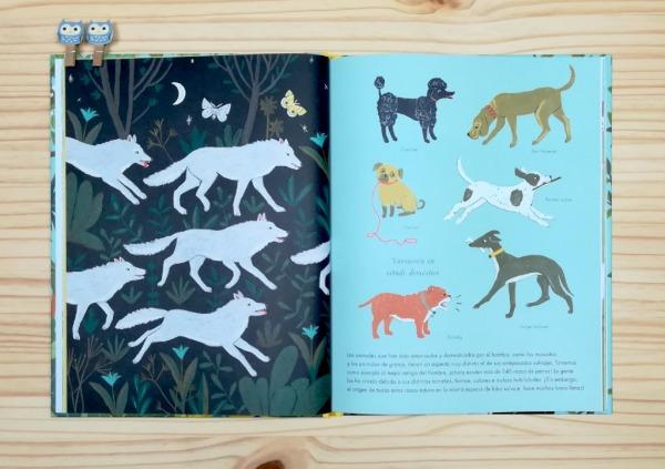 """Páginas interiores 3 del libro informativo """"El origen de las especies"""", de Sabina Radeva, editado por Harperkids y Patio"""